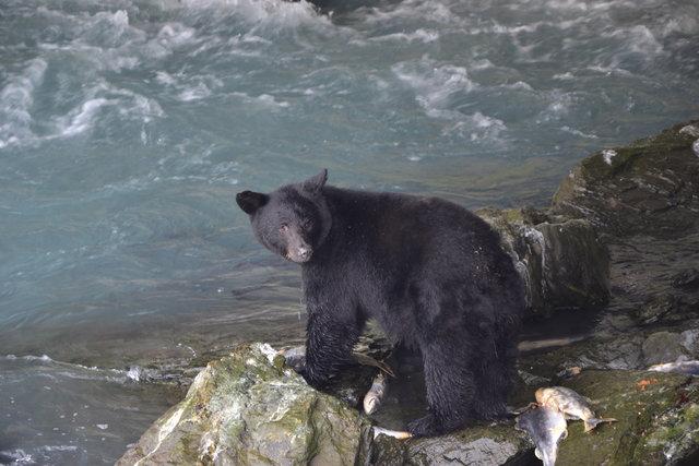 imitando a los osos
